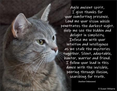 Agile Ancient Spirit