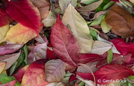 A Carpet of Fallen Leaves