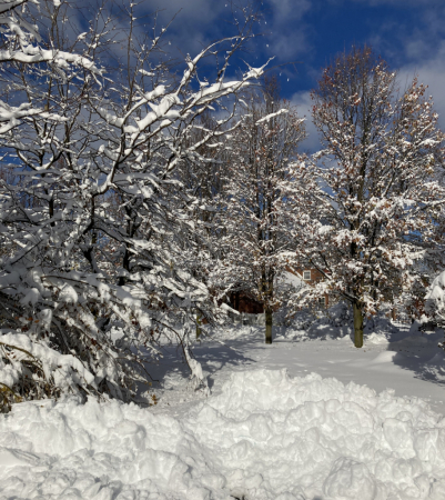 Snowy Forecast
