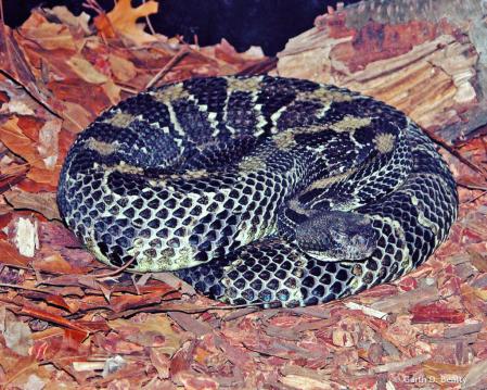 Snake at the Fort Wayne Children