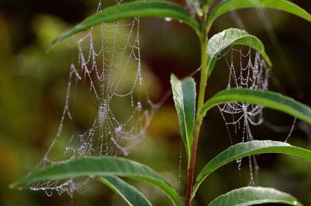 Dual Webs