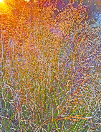 Late afternoon sunlight on autumnal grass.