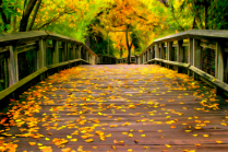 Vibes of Autumn