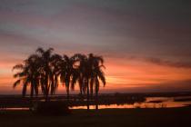 Palms at Sunset