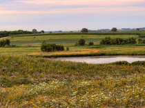Wetland Recovery