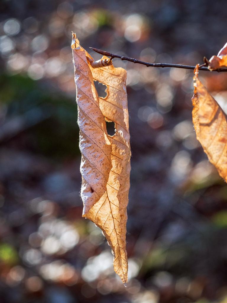 December Leaf 2