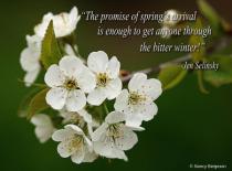 Springs Promise