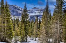 Trees Of Glacier