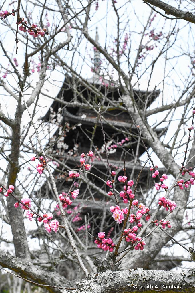 Kokubunji Pagoda 1 (selective desaturation) - ID: 15874638 © Judith A. Kambara