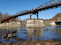 Geese Under the Bridge