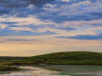 Wetland Restoration Area