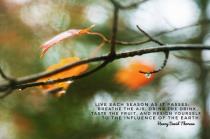 Live Each Season