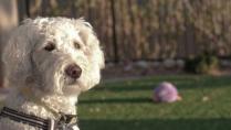 Miss Daisy pondering something!