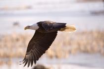 eagle so close