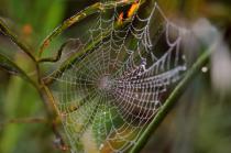 Dew Covered Spiderweb