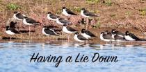 Having a Lie Down!