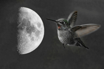Humming to the Moon