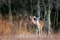 My Deer Friends