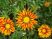 Nature's Perfect Pinwheels.