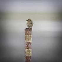 A colourful perch