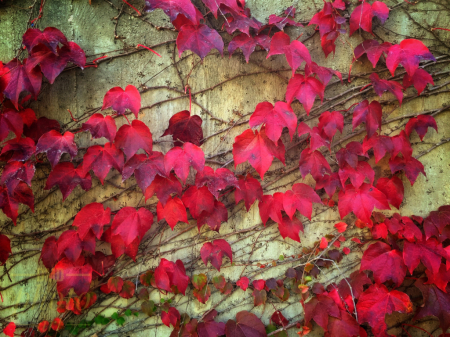 ~ ~ RED LEAVES ~ ~