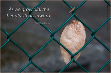 As We Grow...