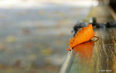 The last leaf...