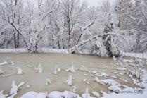 Snowy Pond