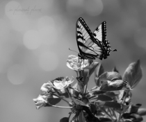 Bokeh and Butterfly