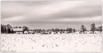 Corn Fields in Winter