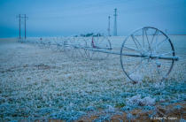 Hoar Frosty Field