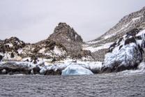 Chinstrap Penguin Metropolis