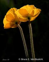 Back lit stems