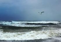 Ocean and Gull