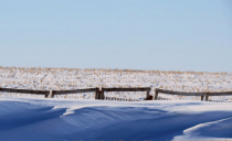 Snowbanks And Fields
