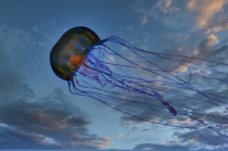 The Last Remaining Flying Jellyfish