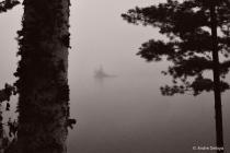 Island in the Morning Fog.