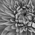 © Theresa Marie Jones PhotoID # 15879104: Mum with Butterfly
