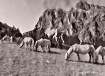 Highland Horses of the Dolomites