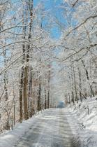 Along A Snowy Road