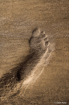 Footprint in the ...