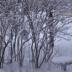 © Theresa Marie Jones PhotoID # 15879561: Snowy