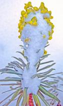 Wild flower in the snowstorm.