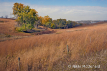 Into the Loess Hills