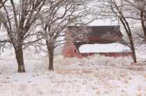 Red Barn in the Snow and Frost