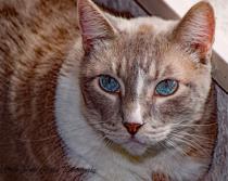 Hello Blue Eyes