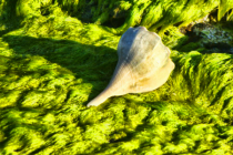 A SNAIL OVER A ROCK COVERED WITH MOSS