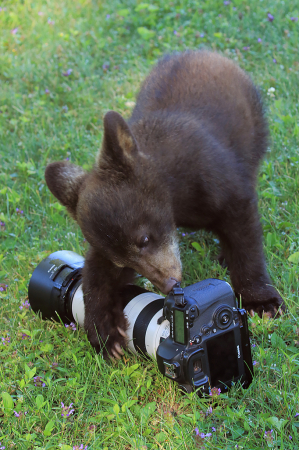 Budding Photographer
