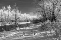 Frosty Winter trees on Minnesota river