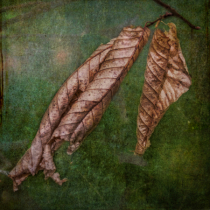 Dead Leaves of Autumn